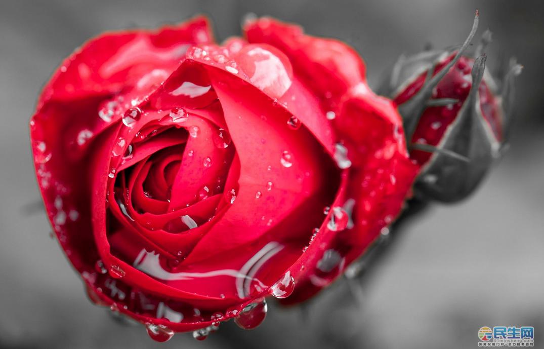 玫瑰结构示意图