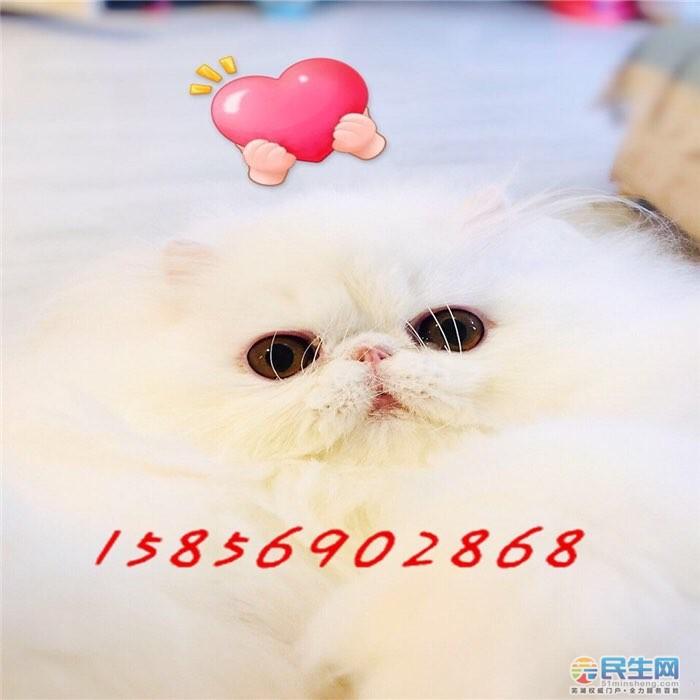 201905091165421557370350250876.jpg